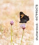 Small photo of Colorful butterfly small tortoiseshell (Aglais urticae) on a flower in summer with golden background, in Sierra de Gredos, Avila, Spain