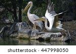 white pelican | Shutterstock . vector #447998050