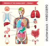 organs of the human body... | Shutterstock .eps vector #448010890