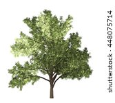 robinia tree isolated on white... | Shutterstock . vector #448075714
