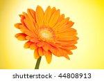 Orange gerbera flower on yellow gradient background - stock photo