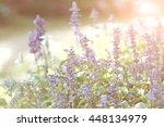 soft focus of summer flowers ... | Shutterstock . vector #448134979