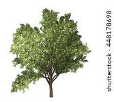 robinia tree isolated on white... | Shutterstock . vector #448178698