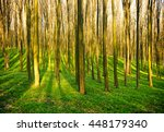 forest without leaves in early... | Shutterstock . vector #448179340