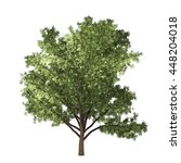 robinia tree isolated on white... | Shutterstock . vector #448204018