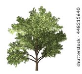 robinia tree isolated on white... | Shutterstock . vector #448215640