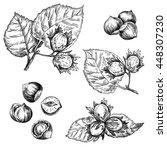 hazelnut plant set. hand drawn...   Shutterstock . vector #448307230