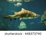 a bunch of sand tiger sharks ... | Shutterstock . vector #448373740
