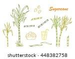 hand drawn sugar cane set.... | Shutterstock .eps vector #448382758