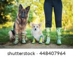 two dogs with its owner wearing ... | Shutterstock . vector #448407964