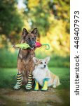 Stock photo two dogs in rain boots holding an umbrella 448407973