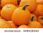 pile of different size pumpkins ... | Shutterstock . vector #448428340