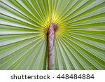 palm leaf background close up... | Shutterstock . vector #448484884