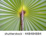 palm leaf background close up... | Shutterstock . vector #448484884
