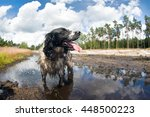 Happy Dog Standing In A Puddle