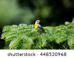 a small warbler of the upper... | Shutterstock . vector #448520968