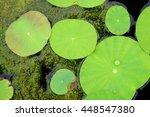 Rain Drop On A Lotus Leaf