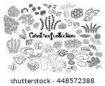 Collection Of Ocean Plants And...