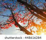 red maple leaves on the tree... | Shutterstock . vector #448616284