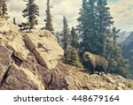 grizzly bear in national park.... | Shutterstock . vector #448679164