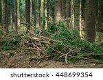 Pine Spruce Conifer Forest Cut...