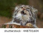Pallas's Cat Lying On A Tree...