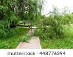 Fallen Tree On The Path