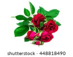 branch of red roses on white... | Shutterstock . vector #448818490