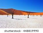 dead camelthorn trees against... | Shutterstock . vector #448819990