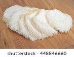 whole lion's mane   bearded... | Shutterstock . vector #448846660
