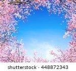 branch of pink cherry flower... | Shutterstock . vector #448872343