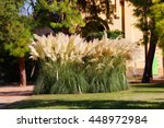 Cortaderia Selloana Grass In...