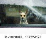 Little Dog Looking Through Car...