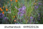 close up of orange and purple... | Shutterstock . vector #449020126