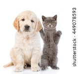 Stock photo kitten petting a puppy behind the ear isolated on white background 449078593