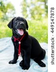 Stock photo labrador retriever puppy in the park on the nature labrador retriever puppy in the yard 449147878