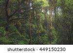 Australian Temperate Rainfores...