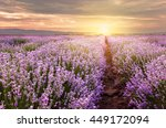 sunrise over lavender field in... | Shutterstock . vector #449172094