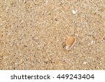 fossil shell on the sand beach | Shutterstock . vector #449243404