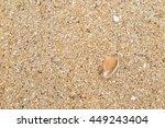 fossil shell on the sand beach | Shutterstock . vector #449243404