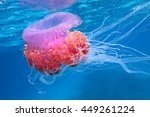 Jellyfish Pink Jellyfish.