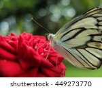 Butterfly With Red Rose