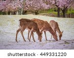 deers at nara park during a... | Shutterstock . vector #449331220