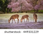 Deers At Nara Park During A...