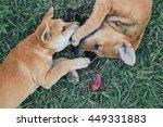 Stock photo dogs puppies cute action like a kiss on the grass 449331883