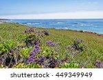 Purple Flowers  Green Plants ...