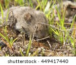 little mouse in the grass | Shutterstock . vector #449417440