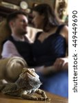 Small photo of Bearded Dragon reptile pet posing with affectionate owners