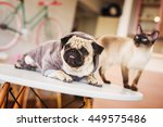 Stock photo pug and a cat on a table 449575486