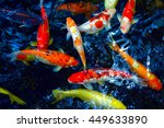 Koi Red And White Fishes...